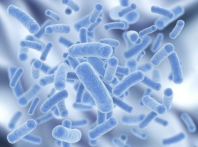 هم افزایی تولیدکنندگان محصولات پروبیوتیک افزایش می یابد