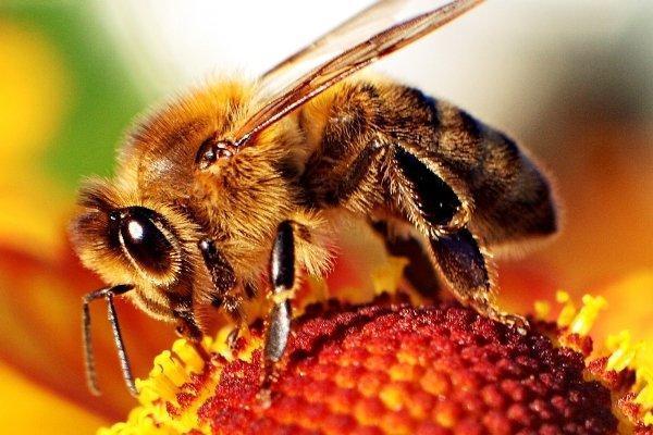 زنبورها قدرتمند می شوند