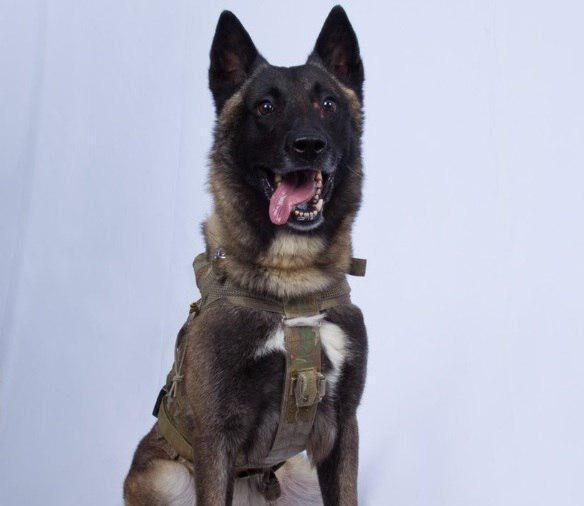 ترامپ تصویر سگ یابنده البغدادی را منتشر کرد