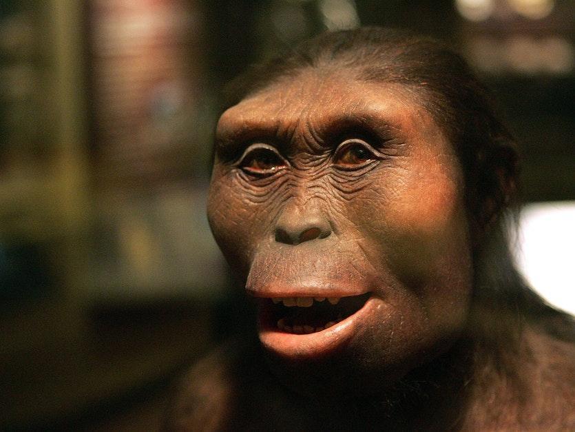 جنوبی کپی ها، گونه ای انسان تبار با دندان های محکم