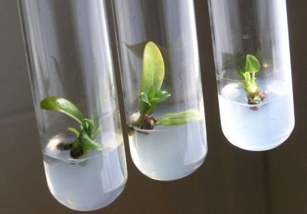 تبدیل دی اکسید کربن به سوخت با نانوکاتالیست ها