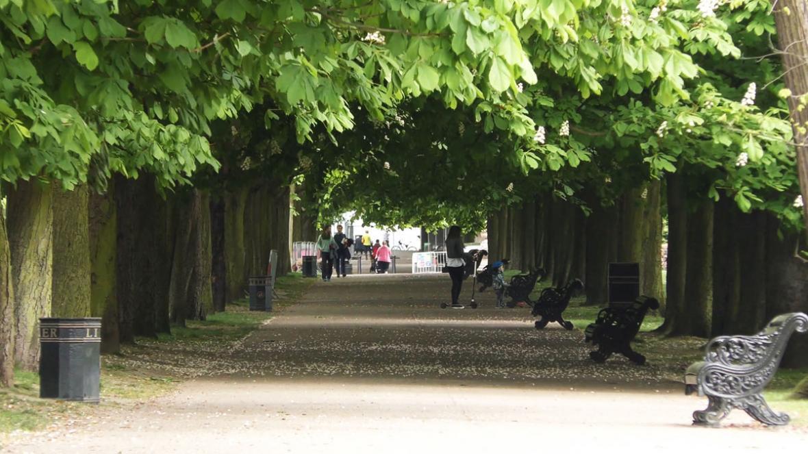 درختان مناسب برای پیاده رو ؛ 8 درخت سایه انداز و چشم نواز