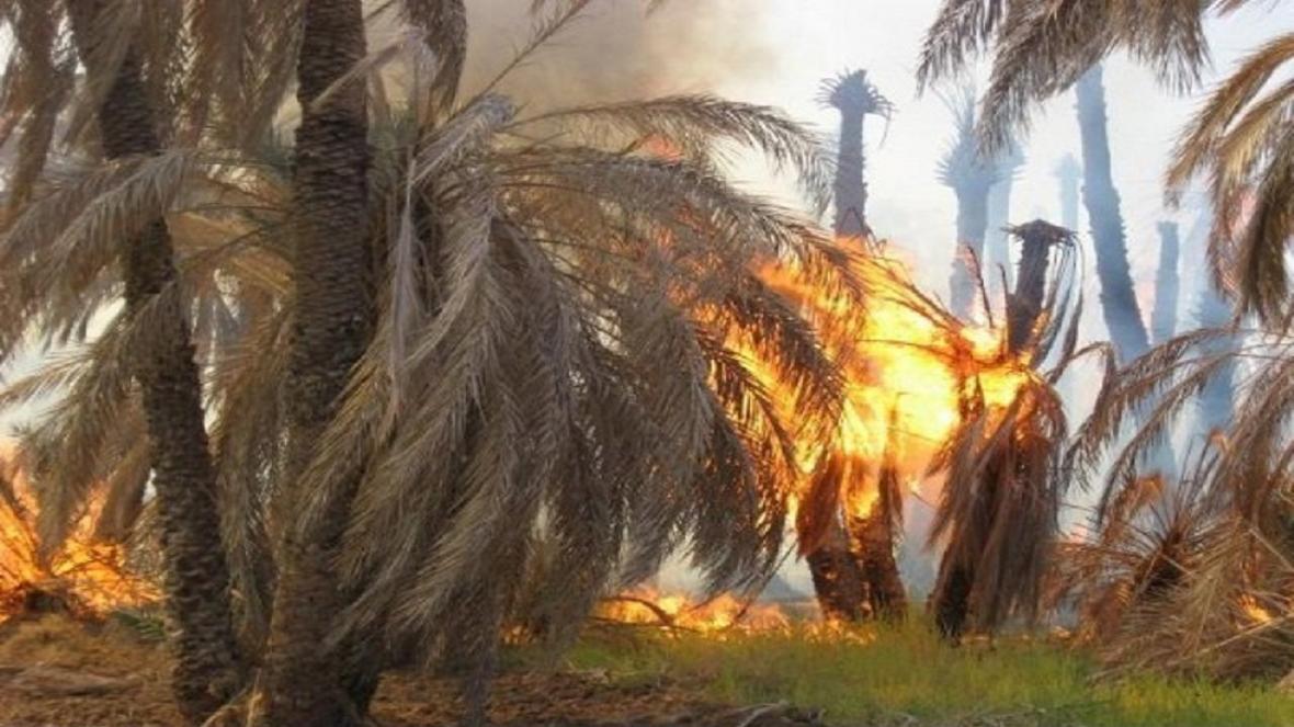 حدود دو هزار اصله نخل دشتستان در آتش سوخت