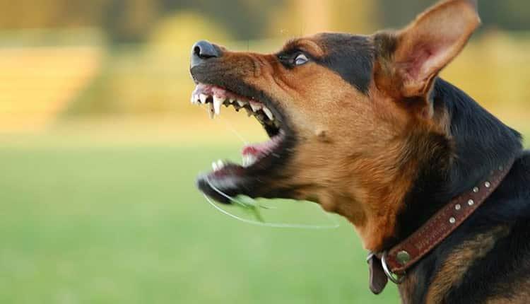 3 علت ترس از حیوانات و روش های درمان این فوبیا