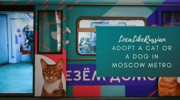 ابتکار مترو مسکو برای حمایت از حیوانات خانگی بی خانمان