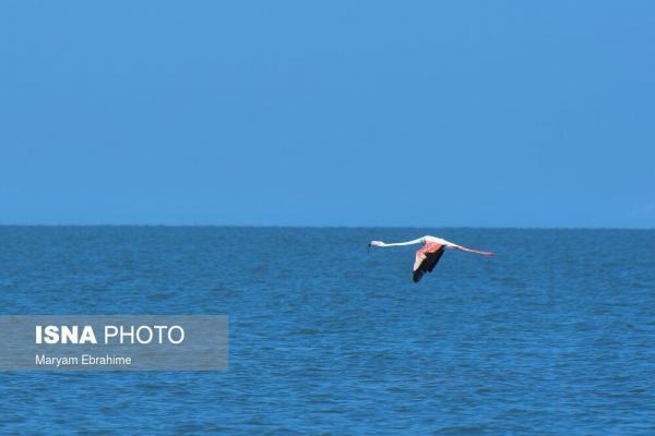 افزایش یک متری تراز دریاچه ارومیه در 7 سال گذشته