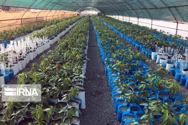 خبرنگاران 140 هزار اصله نهال رایگان در اختیار کشاورزان لرستان قرار می گیرد
